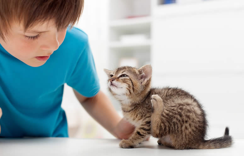 boy looking at his small cat with fleas