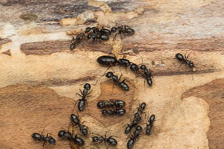 How to Make Your Home Unattractive to Pests