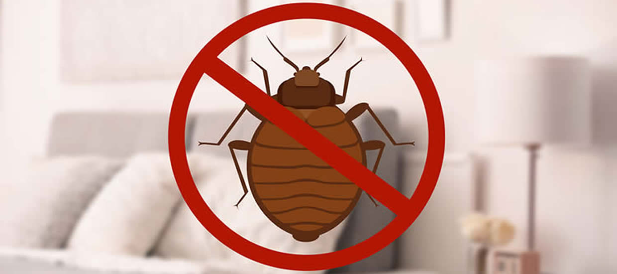 Bedbugs FAQs – Learn All About Bed Bugs