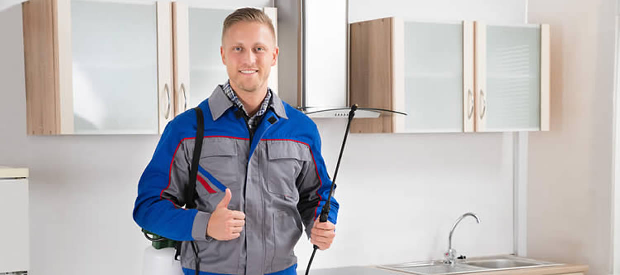 8 Things to Consider When Hiring a Pest Control Company